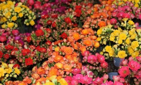 Festival de Flores de Holambra chega a Maceió nesta quinta (26)